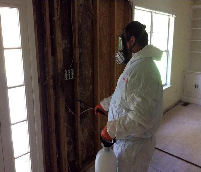 Mold Job In Signal Mountain