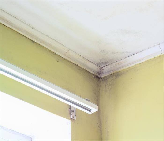Mold Remediation in Chattanooga