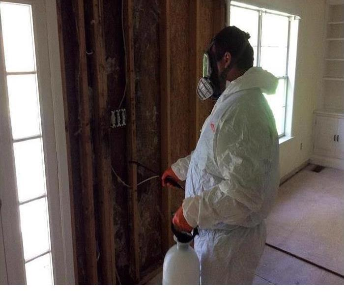 Mold Remediation 3 Common Types of Mold You Might Find Inside Your Home